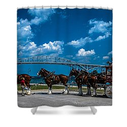 Budweiser Clydsdales And Blue Water Bridges Shower Curtain