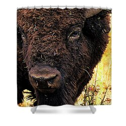 Ragweed Buffalo Shower Curtain by Jim Pavelle