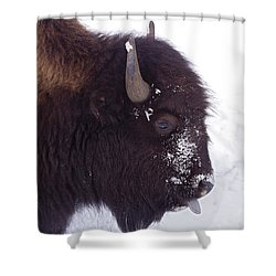 Buffalo In Snow   #6983 Shower Curtain