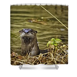 Buffalo National River Otter  Shower Curtain by Michael Dougherty