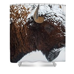 Buffalo Nickel Shower Curtain