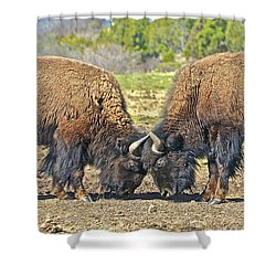 Buffaloes At Play Shower Curtain