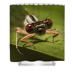 Bug Eyes Shower Curtain by Jean Noren