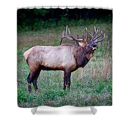 Shower Curtain featuring the photograph Bugle Solo From Bull Elk by John Haldane