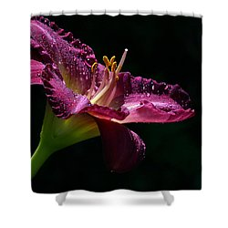 Bugler Shower Curtain by Doug Norkum