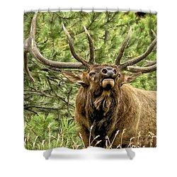 Bugling Bull Elk II Shower Curtain by Ron White