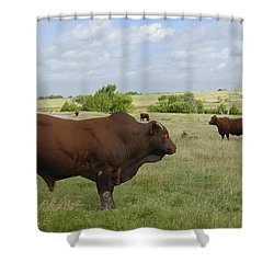 Shower Curtain featuring the photograph Bull And Cattle by Charles Beeler