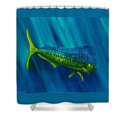Bull Dolphin Shower Curtain by Steve Ozment
