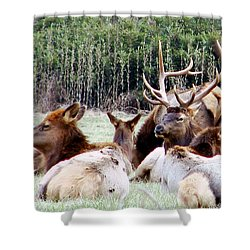 Bull Elk And His Girls 2 Shower Curtain