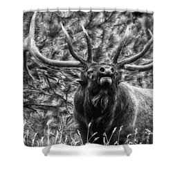 Bull Elk Bugling Black And White Shower Curtain by Ron White