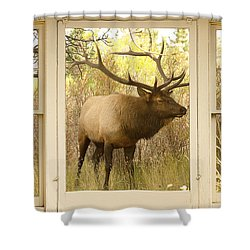 Bull Elk Window View Shower Curtain by James BO  Insogna