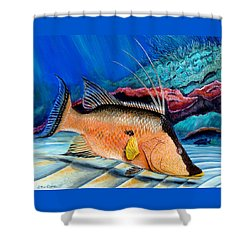 Bull Hogfish Shower Curtain