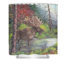 Bull Moose Shower Curtain by Megan Walsh