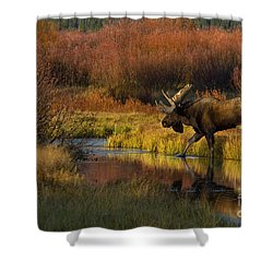 Bull Moose Shower Curtain by Thomas and Pat Leeson