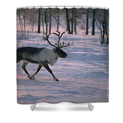 Bull Reindeer In  Siberia Shower Curtain by Bryan and Cherry Alexander