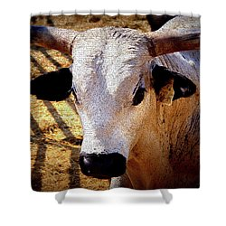 Bull Riders - Nightmare - Rodeo Bull Shower Curtain