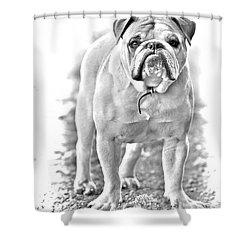 Bulldog Shower Curtain by James BO  Insogna