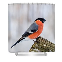 Bullfinch On The Edge Shower Curtain