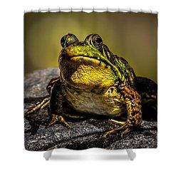 Bullfrog Watching Shower Curtain by Bob Orsillo