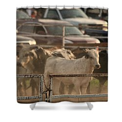 Bulls Shower Curtain by Denise Romano
