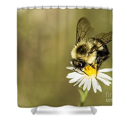 Bumble Bee Macro Shower Curtain by Debbie Green