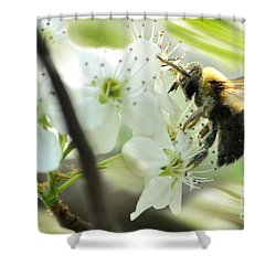 Bumble Bee On Flower Shower Curtain by Dan Friend