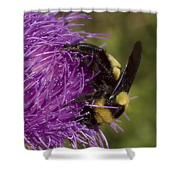Bumble Bee On Thistle Shower Curtain by Shelly Gunderson