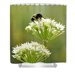 Bumblebee On Garlic Chives Shower Curtain by Rebecca Sherman