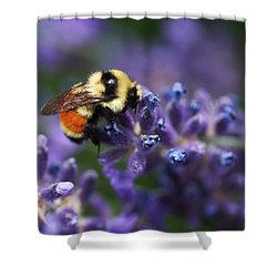 Bumblebee On Lavender Shower Curtain by Rona Black