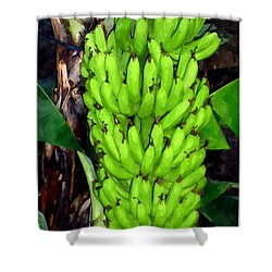 Bunch Of Bananas Shower Curtain by Lanjee Chee
