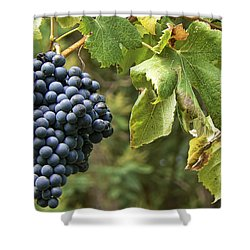 Bunch Of Grapes Shower Curtain by Paulo Goncalves