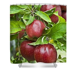 Bunch Of Red Apples Shower Curtain by Anthony Sacco