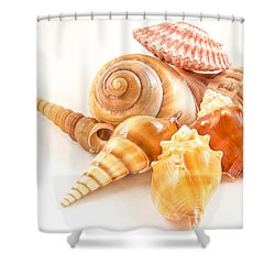 Bunch Of Shells Shower Curtain by Jean Noren