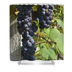 Bunches Of Grapes Shower Curtain