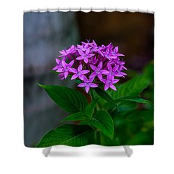 Bundle Of Joy Shower Curtain