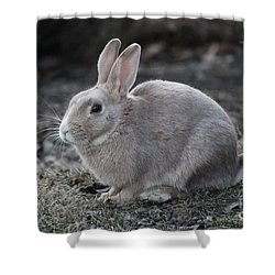 Shower Curtain featuring the photograph Bunny by Ann E Robson