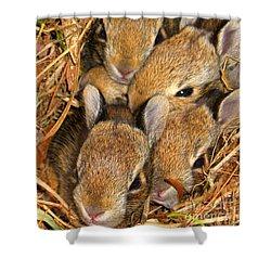 Bunny Babies Shower Curtain