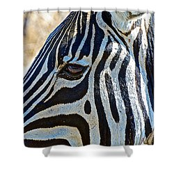 Burchell's Zebra's Face In Kruger National Park-south Africa Shower Curtain