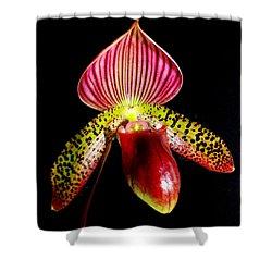 Burgundy Lady Slipper Shower Curtain by Karen Wiles
