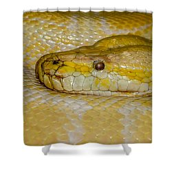 Burmese Python Shower Curtain by Ernie Echols