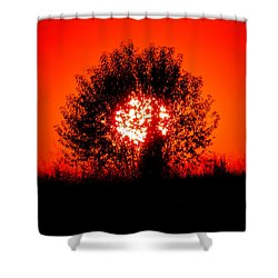 Burning Bush Shower Curtain by Nick Kirby