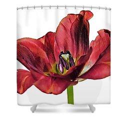 Burning Tulip Shower Curtain
