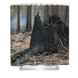 Burnt Tree Trunk Shower Curtain by Juli Scalzi