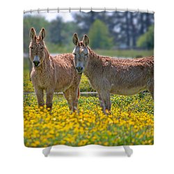 Burros In The Buttercups Shower Curtain by Suzanne Stout