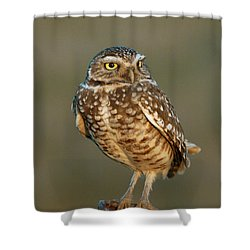 Burrowing Owl At Sunset Shower Curtain by Doug Herr