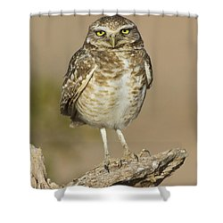 Shower Curtain featuring the photograph Burrowing Owl by Bryan Keil