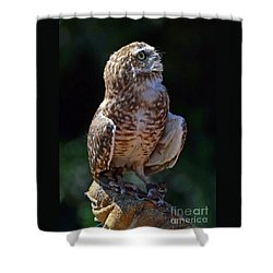 Shower Curtain featuring the photograph Burrowing Owl by Debby Pueschel