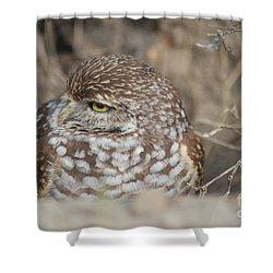 Burrowing Owl Shower Curtain by Oksana Semenchenko
