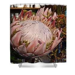 Shower Curtain featuring the photograph Burst Of Pink  by Cathy Dee Janes