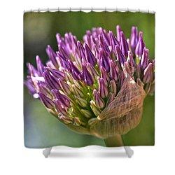 Bursting Allium Purple Sensation Shower Curtain by Rona Black